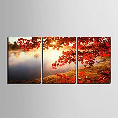 Kunst op stretchdoek, landschap met boom - set van 3
