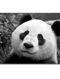 Imprimé sur toile animaux de panda géant par SD intelligente avec cadre étiré