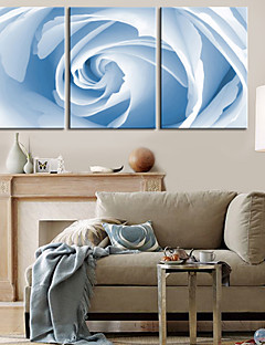 Stretched Canvas Print Art Floral White Rose Set of 3
