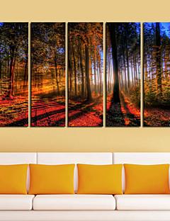 Op gespannen doek Kunst Landschap Hout in Sunrise Set van 5