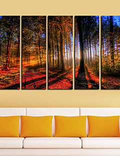 Stretched Canvas Print Art Landscape Woods in Sunrise Set of 5