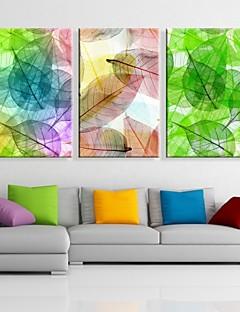 allungato tela colorata lascia set pittura decorativa di 3