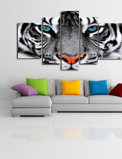 視覚star®blackとハングアップする準備ができて5高品質のキャンバスの白い野生の虎動物キャンバスセット