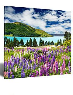 visuaalinen star®square violetti laventeli kentät maisemia kankaalle seinälle Reay roikkua