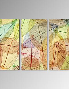 Vida Imóvel / Lazer / Botânico / Moderno / Romântico / Pop Art Impressão em tela 3 Painéis Pronto para pendurar , Vertical