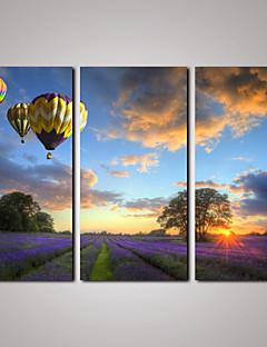 Fritid / Landskap / Botanisk / Fotografisk / Realism / Romantik / Resor Canvastryck Tre paneler Redo att hänga , Horisontell