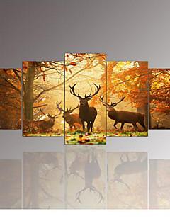 Animal Toile Cinq Panneaux Prêt à accrocher,Format Horizontal
