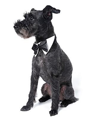 Cães Gravata/Gravata Borboleta Laranja / Amarelo / Verde / Preto / Branco Roupas para Cães Verão / Primavera/Outono Laço Fofo / Casamento