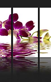 visuaalinen star®orchid kukka venytetään kankaalle tulosteita seinä sisustus taidetta valmis roikkumaan