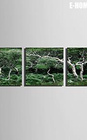 e-Home® venytetty kankaalle taidetta metsässä koriste maalaus sarja 3