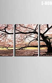 e-Home® venytetty kankaalle taidetta kirsikkapuu koriste maalaus sarja 3