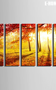 E-HOME® Stretched Canvas Art The Sunset Red Maple Forest Decorative Painting  Set of 5