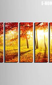 e-Home® sträckta canvas konst solnedgången röd lönn skogen dekorationsmåleri uppsättning av 5