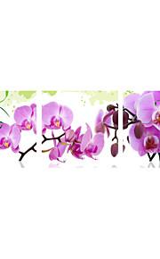 Botanisk Lerret Print Tre Paneler Klar til å henge , Vannrett