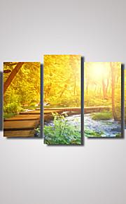 トラベル / カジュアル / 風景画 / 植物の / 写真 / ロマンチック キャンバスプリント 5枚 ハングアップする準備ができました , 横式