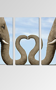 VISUAL STAR®Romantic Elephant Love Stretched Canvas Art Set of 3 for Home Decoration Ready to Hang