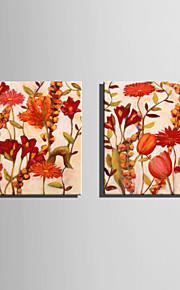 Kasvitiede Canvas Tulosta 2 paneeli Valmis Hang,Neliö