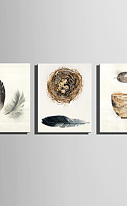 E-HOME Stretched Canvas Art Feather And Leaves The Nest Decoration Painting  Set Of 3