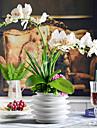 22 «elegantes orchidees papillon colore avec vase en ceramique blanc