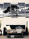 Stretched Canvas Konst Svartvit i skuggan av träd Uppsättning av 5