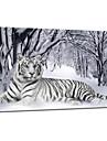 visuell star®tiger djur kanfasmålning konst vinter snö sträckt arbetsytan utskrift