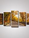 Loisir / Paysage / Botanique / Photographie / Romantique / Voyage Toile Cinq Panneaux Pret a accrocher , Format Horizontal