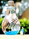 plantes simples de paysages ecologiques micro verre paysage bouteille d\'algues creative pot anniversaire est le cadeau de Saint-Valentin