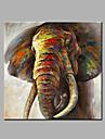 Peint a la main Abstrait Animal Carre,Moderne Classique Un Panneau Toile Peinture a l\'huile Hang-peint For Decoration d\'interieur