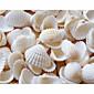 ビーチをテーマにした貝殻の結婚式のシャワーのテーブルの装飾(90本パック)